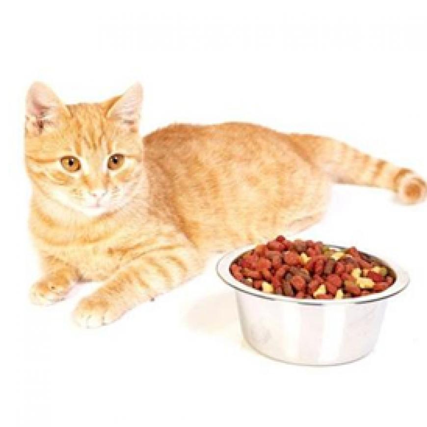 Питание для кошек